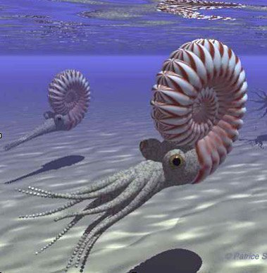 Ammonites in the ocean
