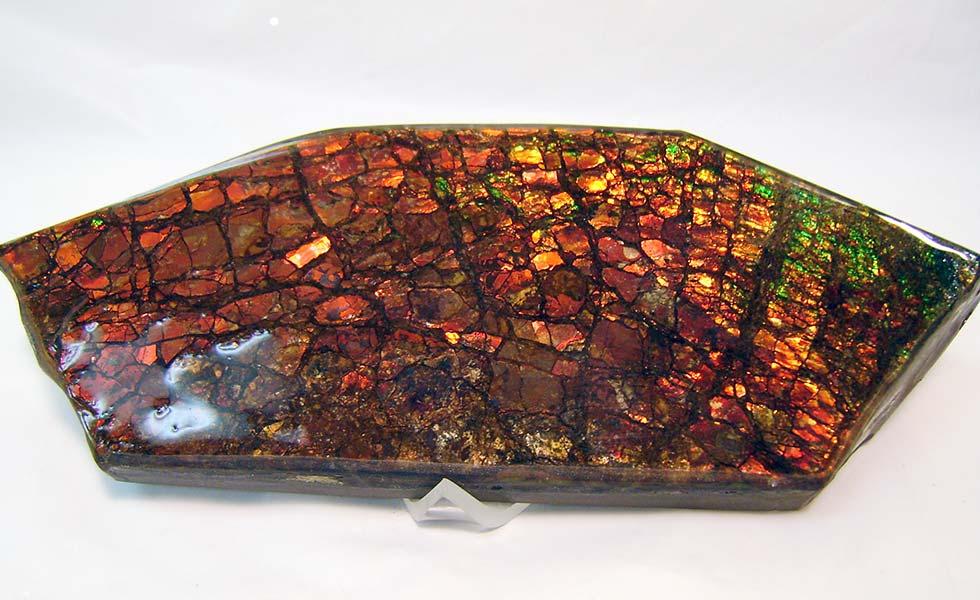 Canadian-Ammolite-specimen