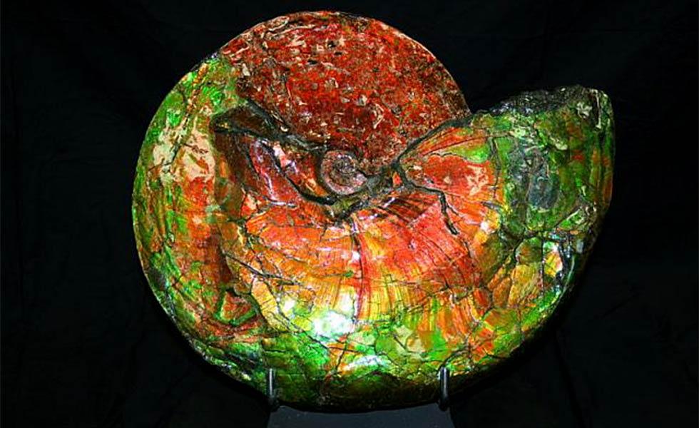 ammolite-shell-2_lg
