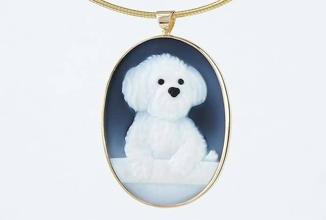 bo-cameo-dog-front-