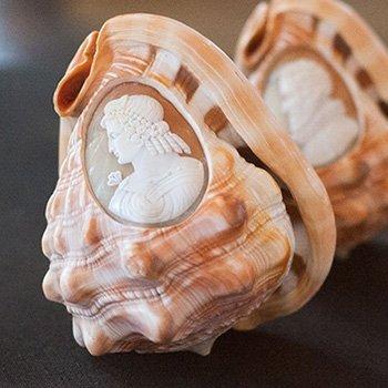 cassis rufa carnelian shell