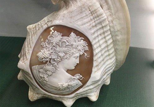 helmet-shell-cameo-specimen