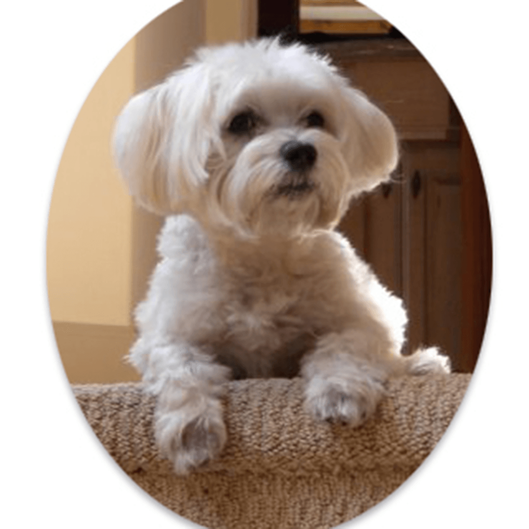 Bo-portrait-photo-dog-cameo-sq