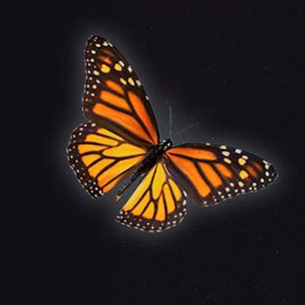 caroline-monarch-butterfly-back-sq